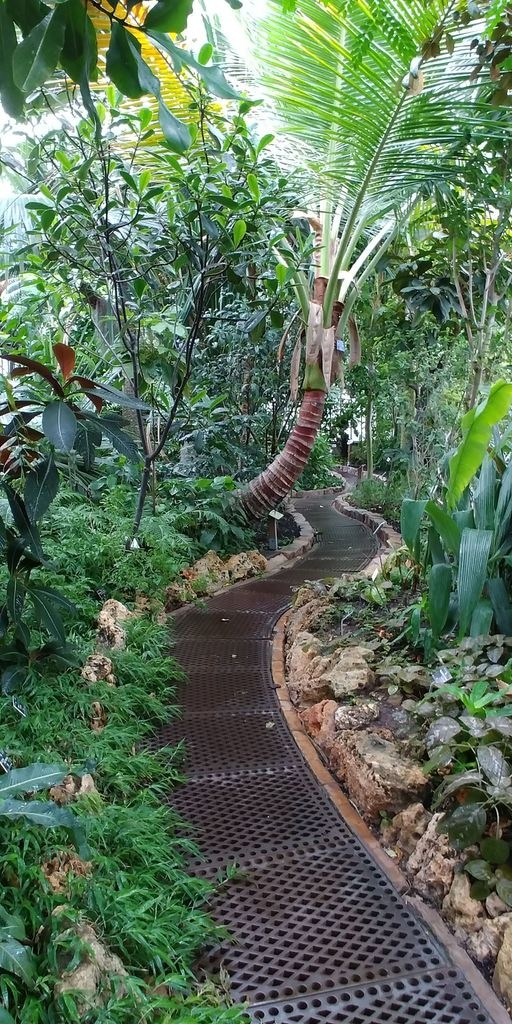chemin dans la serre des pandanus
