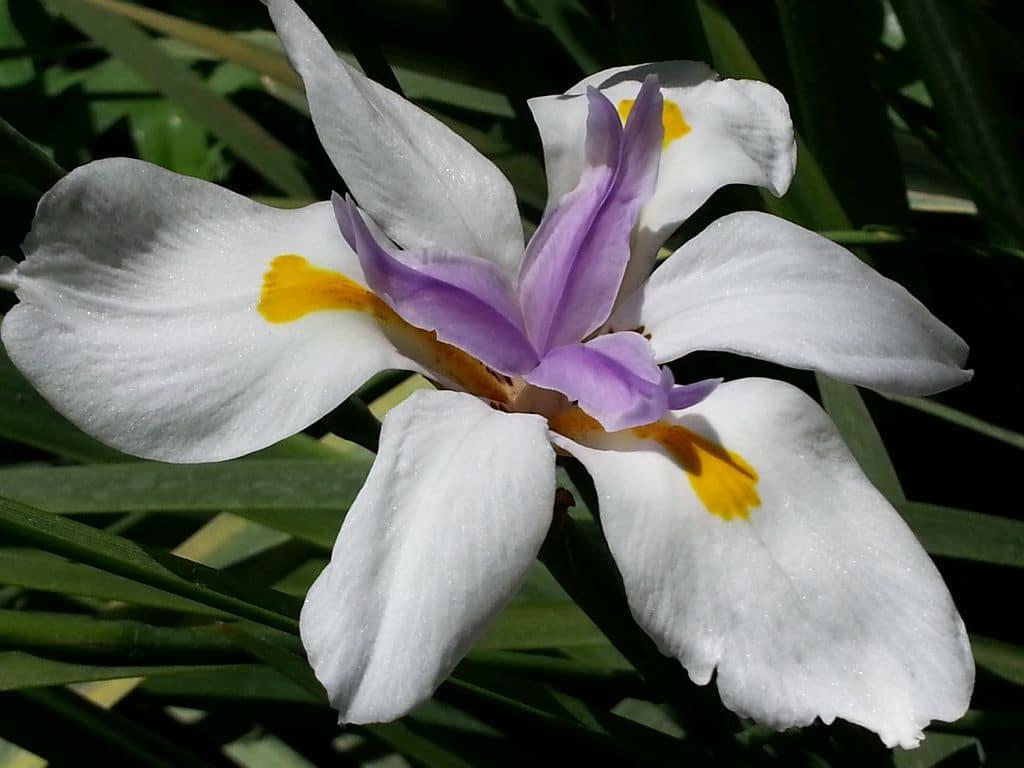 fleurs de la serre