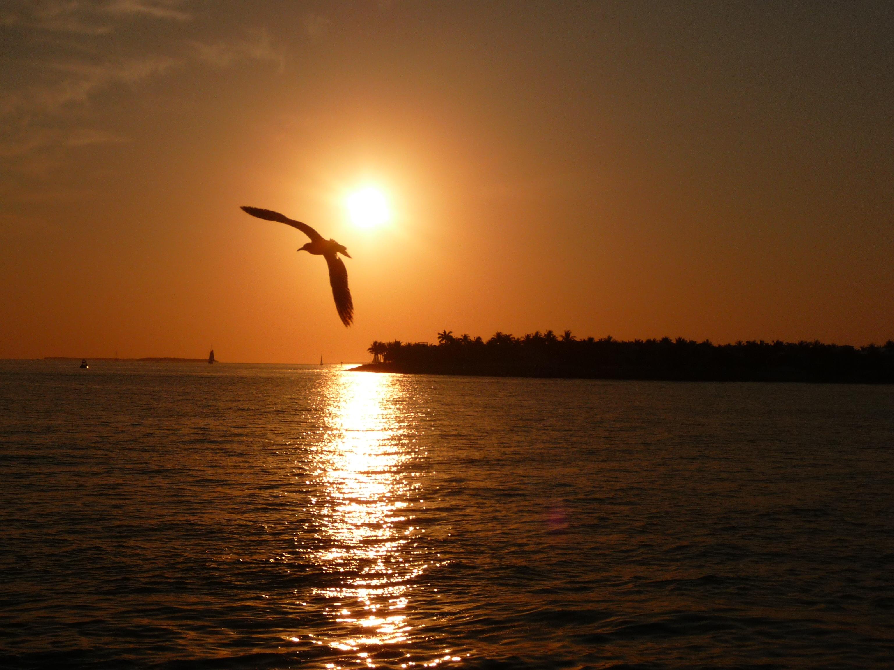 coucher de soleil key west sunset