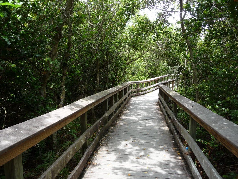 everglades anhinga trail floride