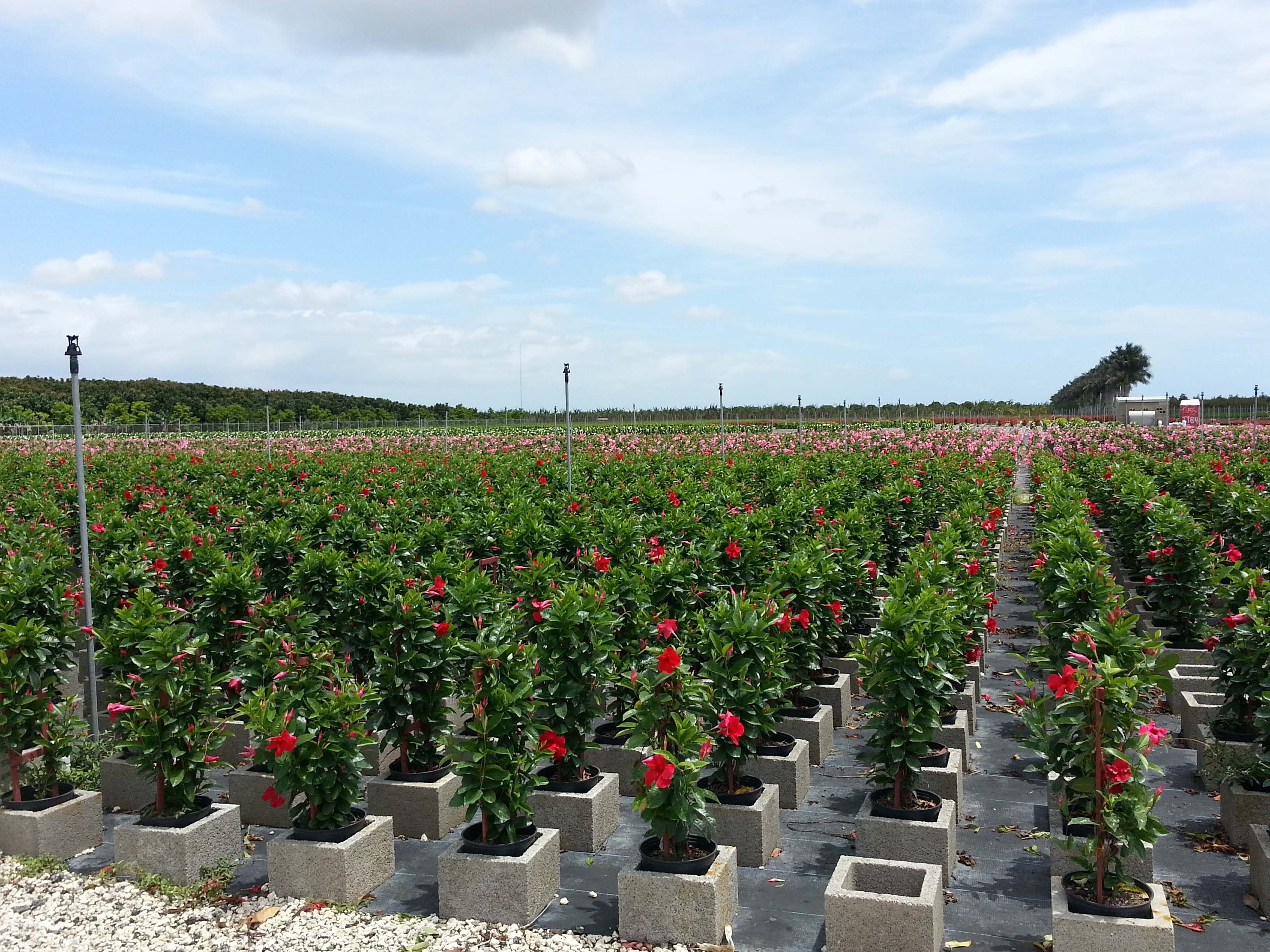 exploitation fleurs everglades floride