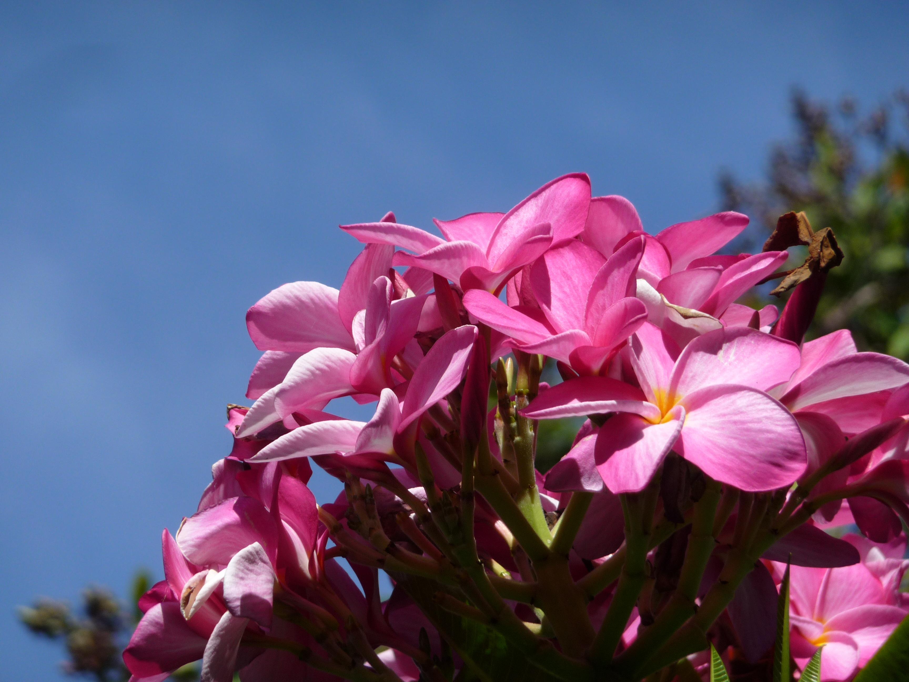 fleurs coconut grove miami vizcaya museum