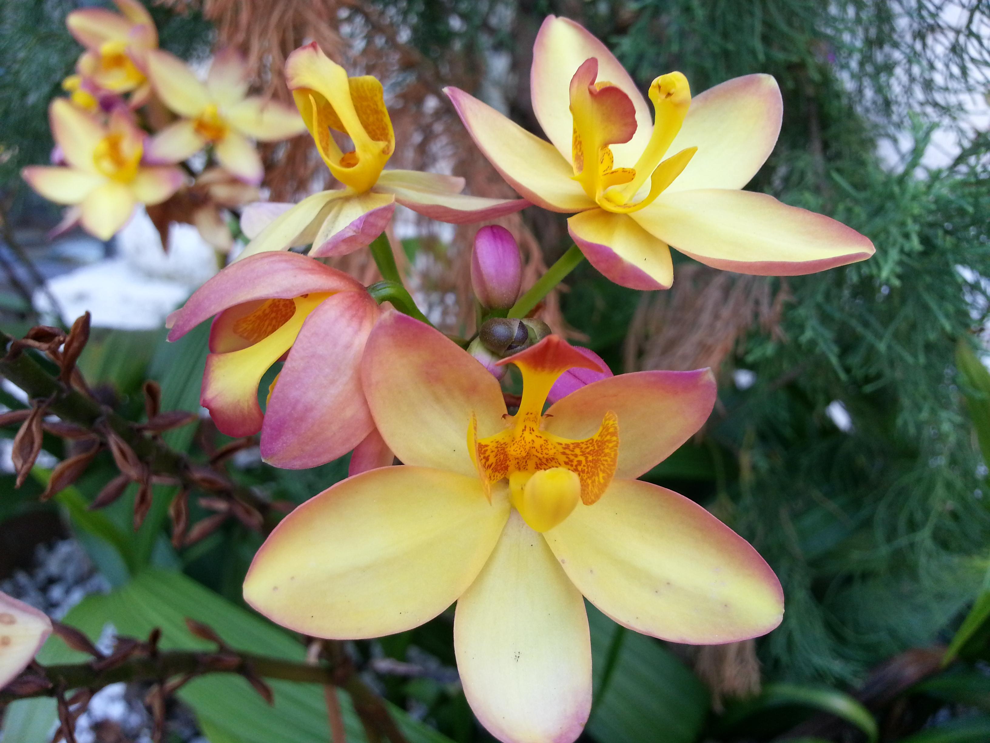 fleurs vizcaya miami