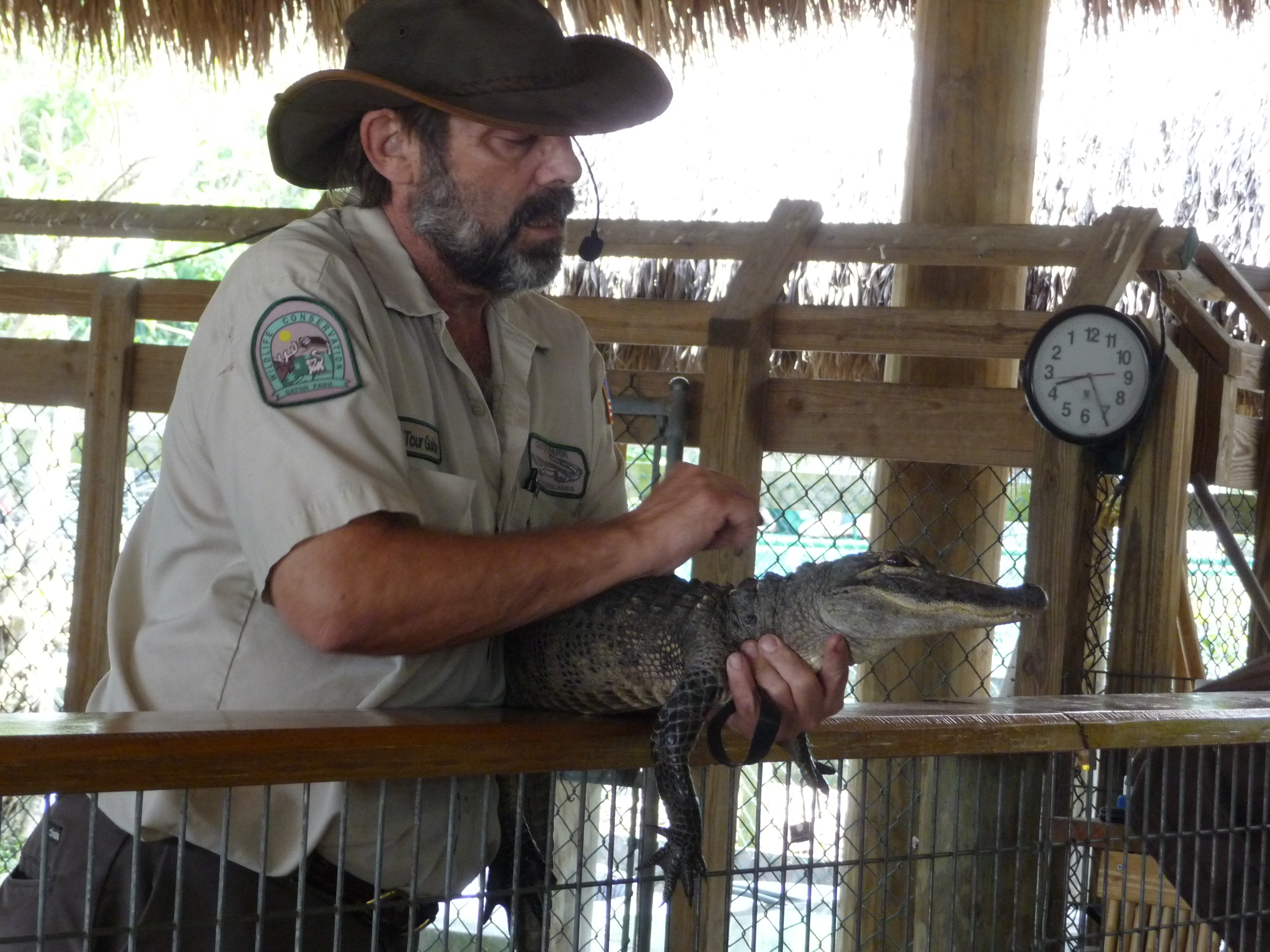 gator show gator park everglades florida