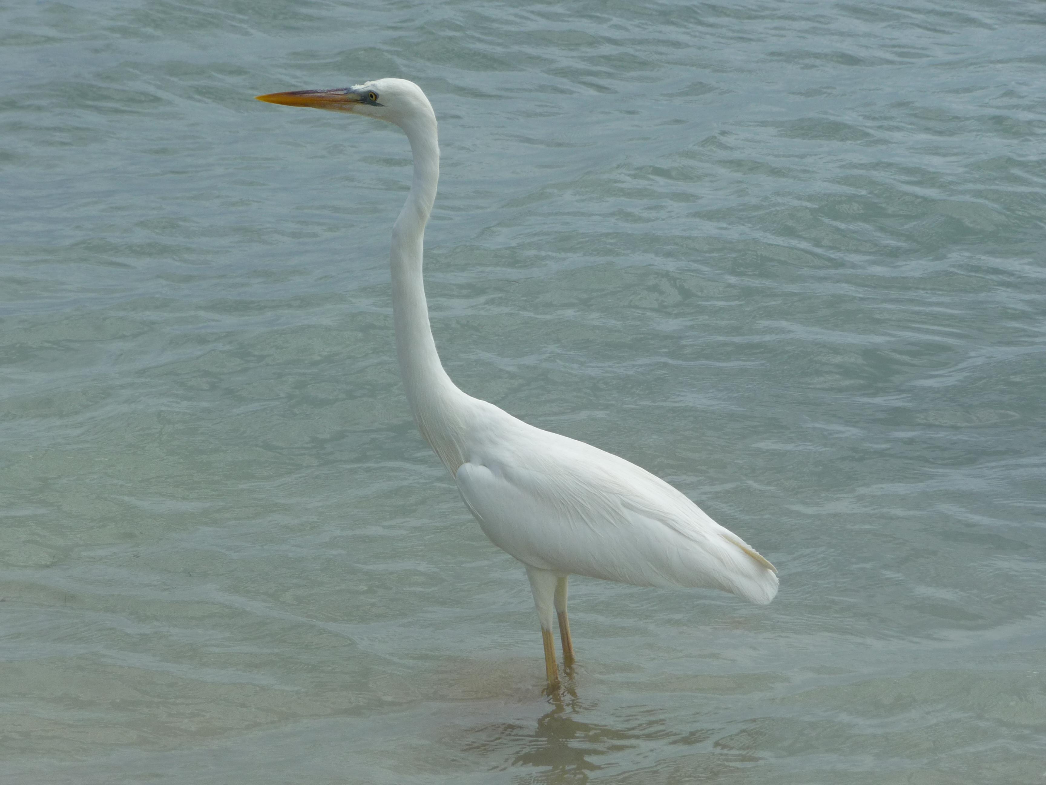 oiseau sombrero beach keys