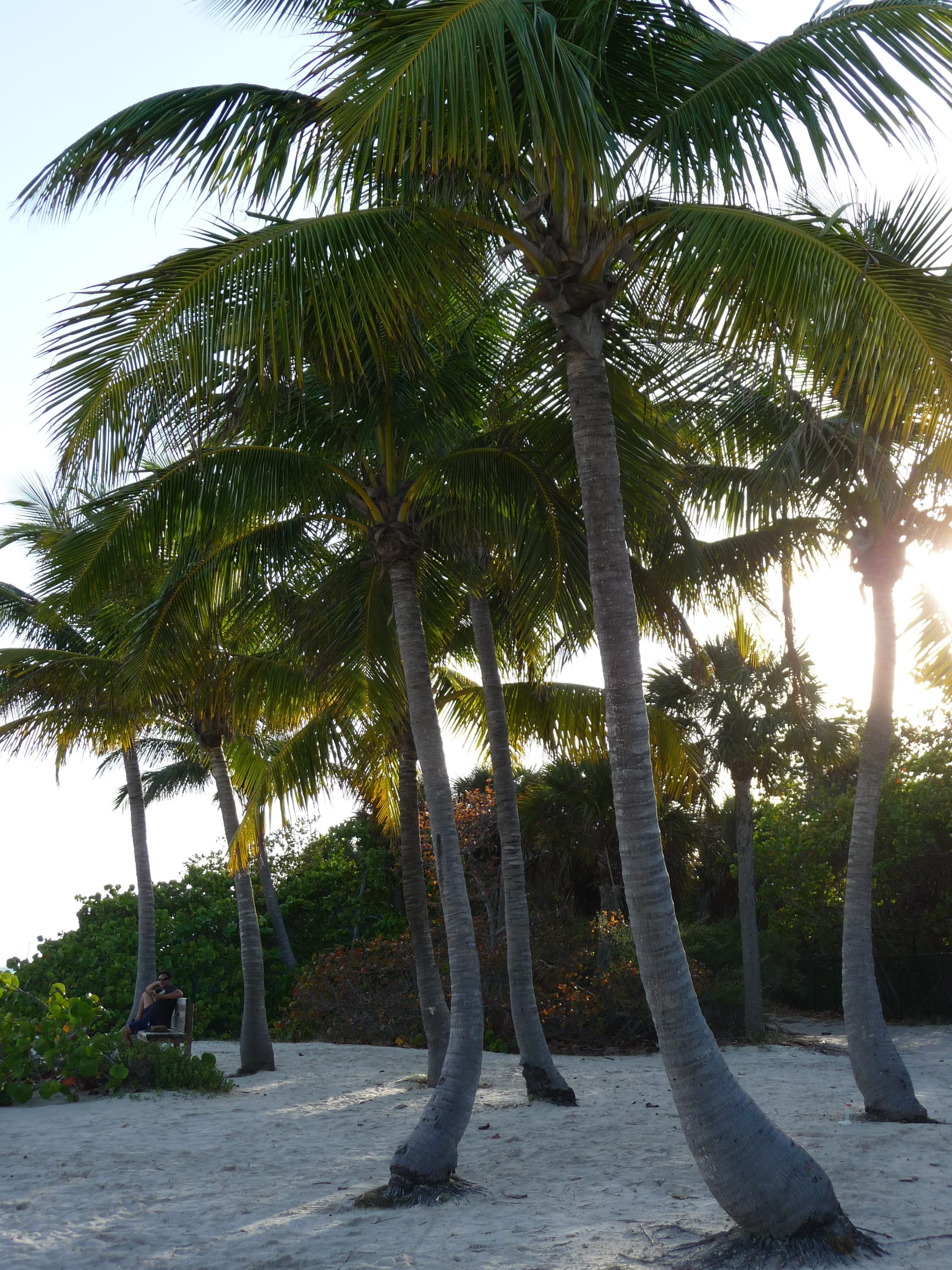 palmiers plage key biscayne