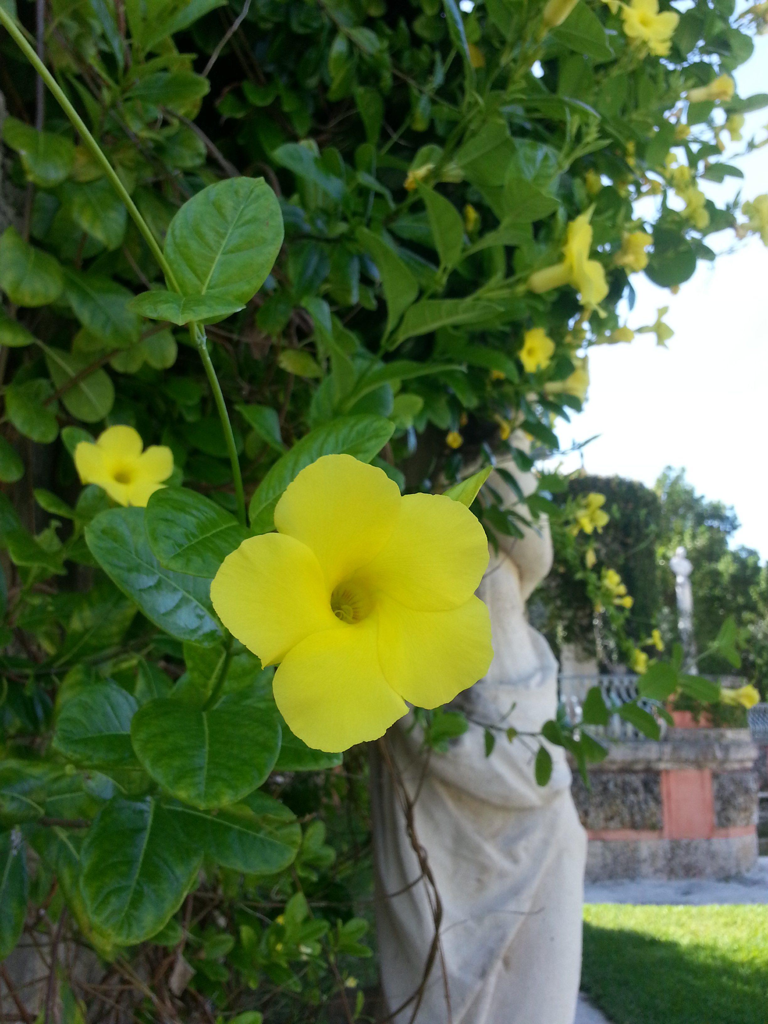 vizcaya gardens miami