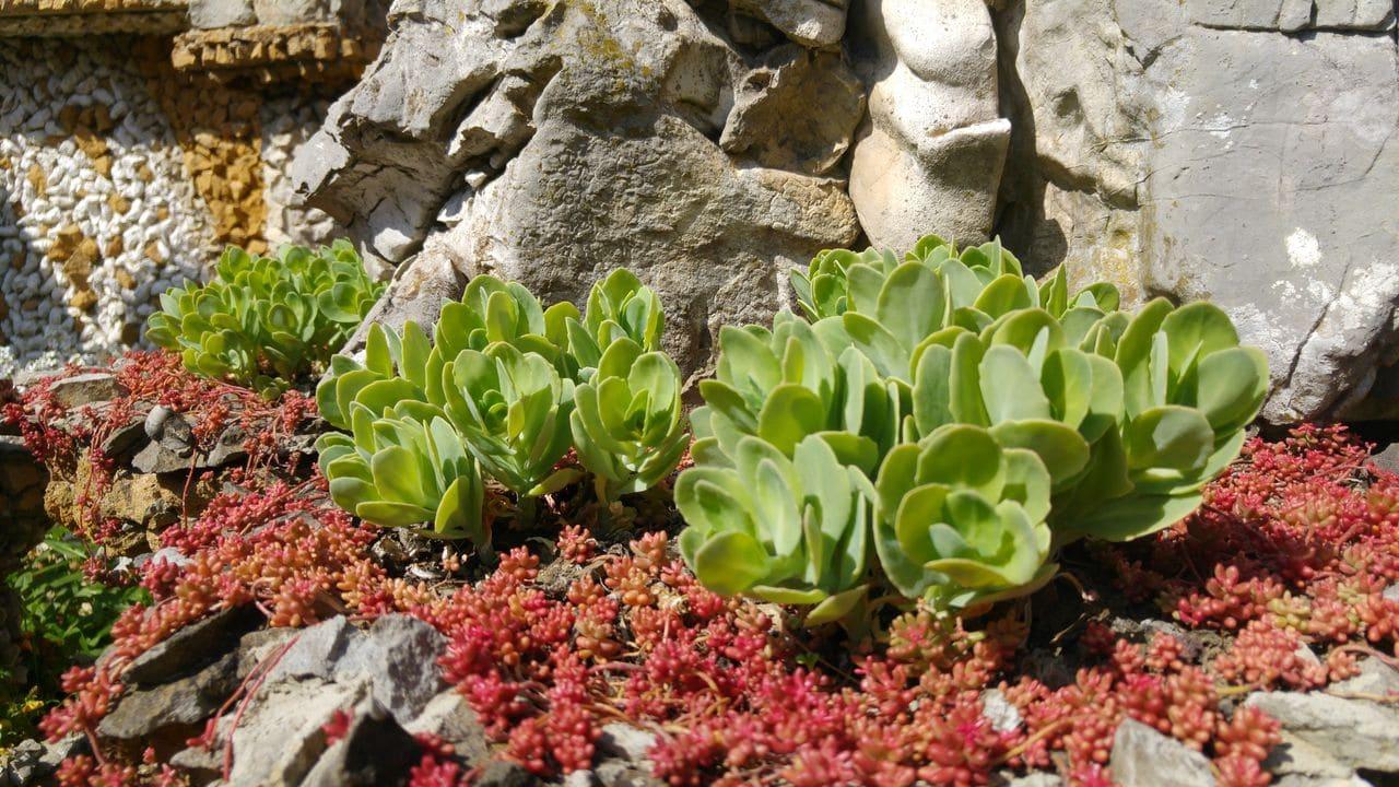 jardin rosa mir vegetal mineral coquillage