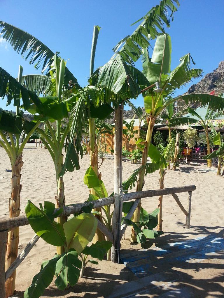 tsambika douche bananiers