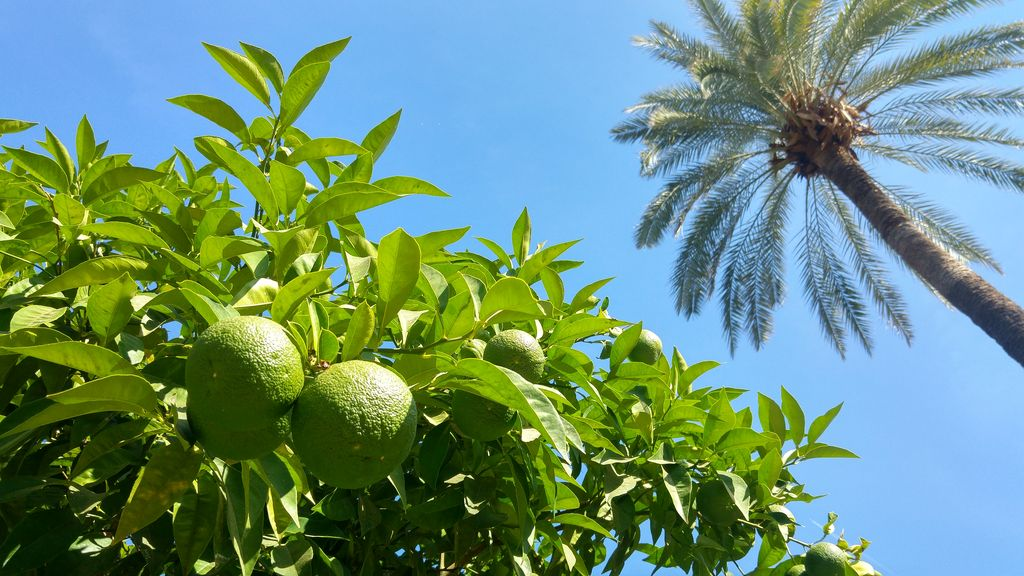 visiter jardins tropicaux real alcazar seville