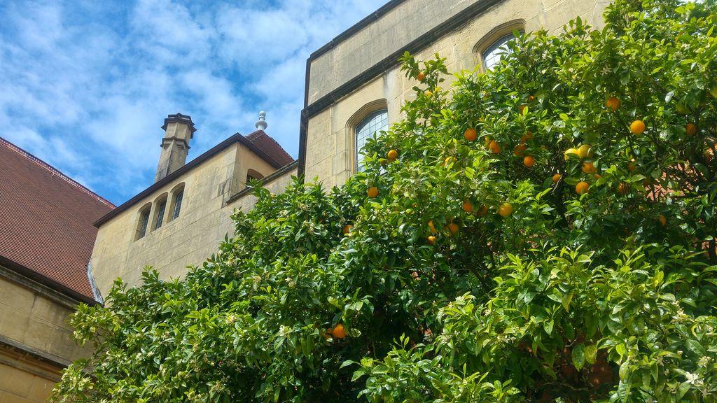 miramar orangers jardin san sebastian
