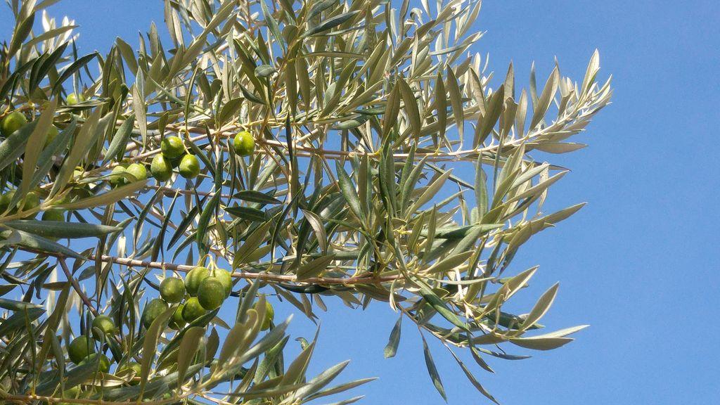 happycurio olivier portugal