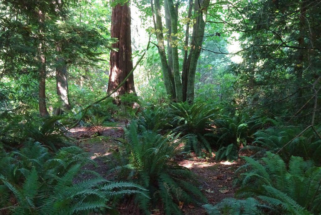 stanley park vancouver nature