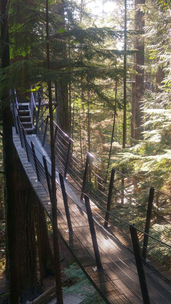 treetop adventures capilano vancouver
