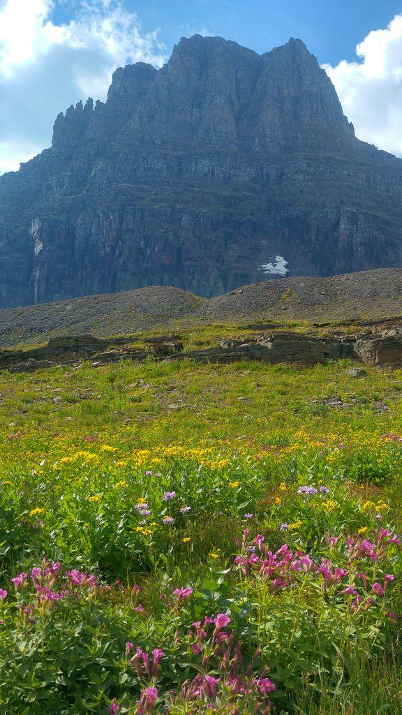 vegetation glacier
