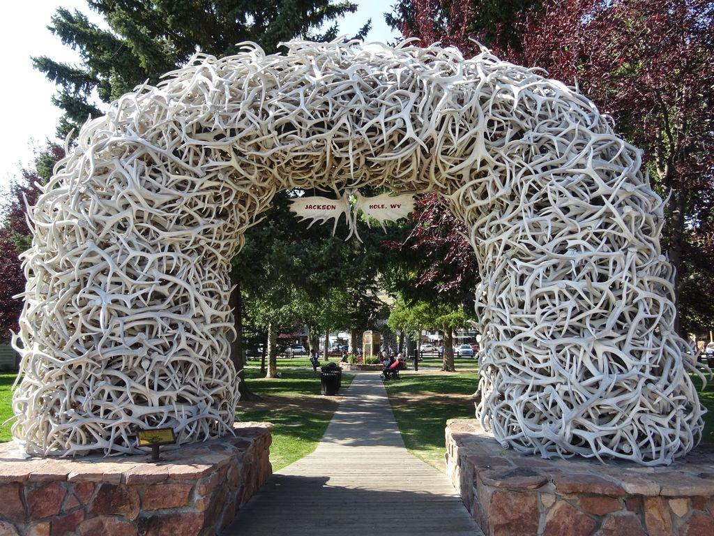 parc de jackson elk