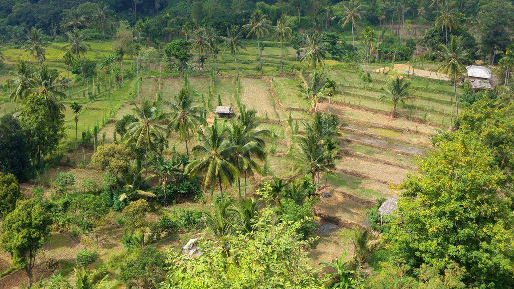 cultures terrasse lombok