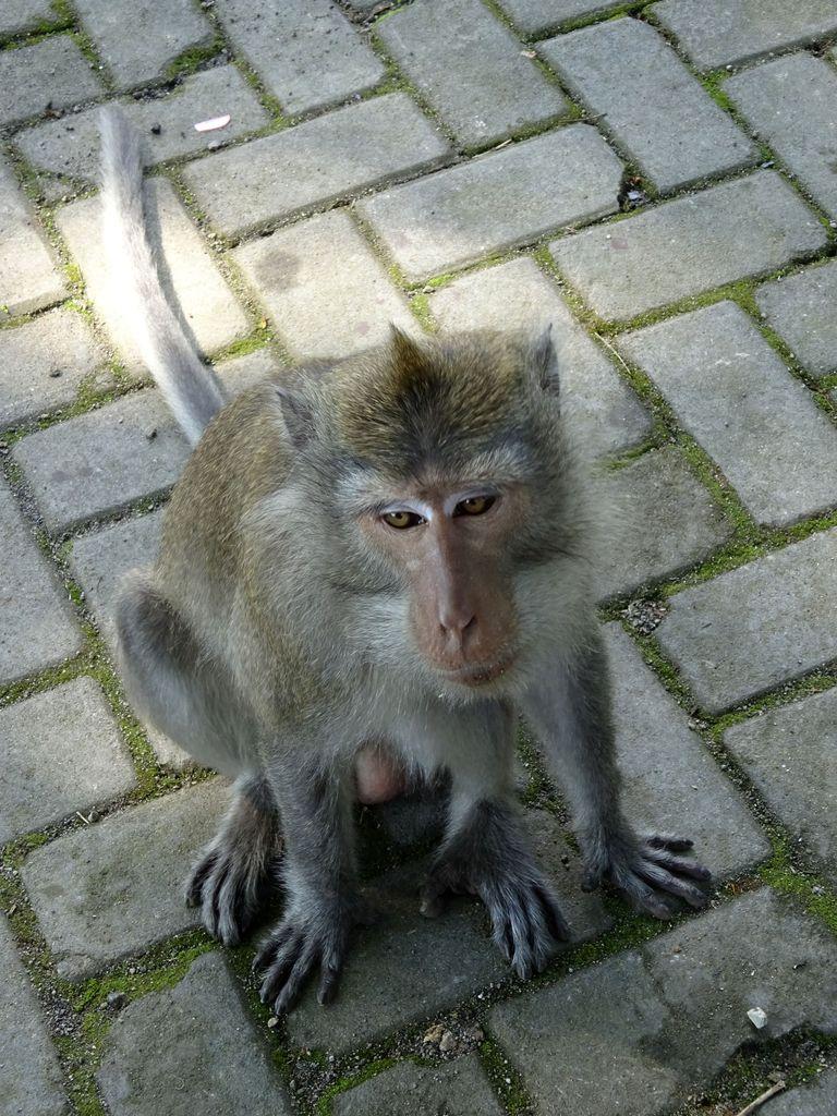 lombok foret des singes