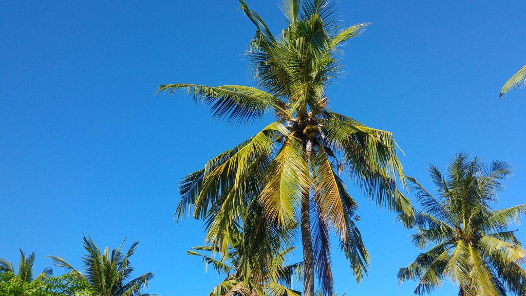 palmiers gili trawangan
