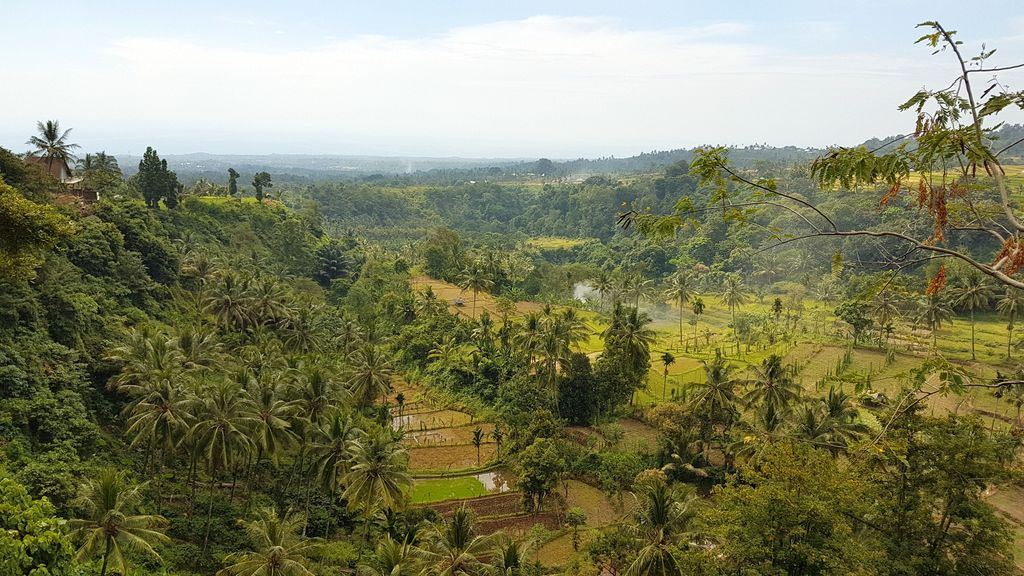 senaru forest lombok