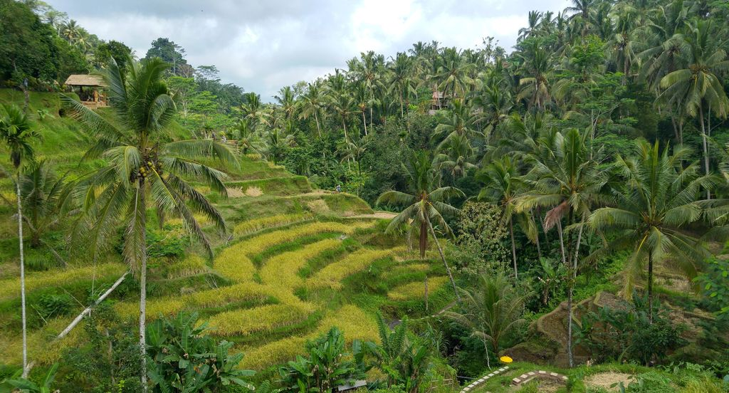 riziere en terrasse de tagallalang