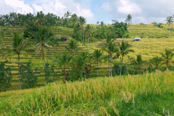 bali vue sur riziere de jatiluwih