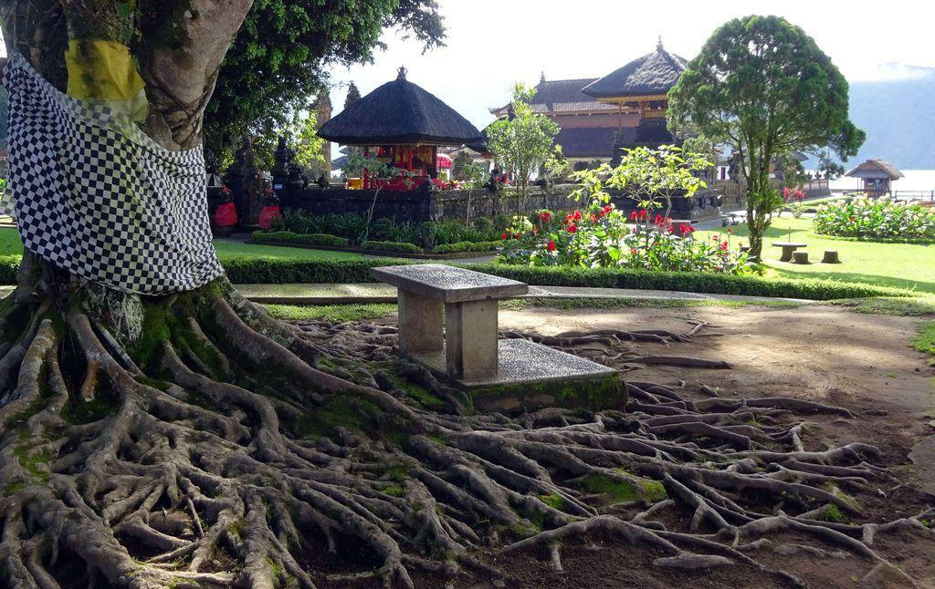 arbre avec grandes racines a bali