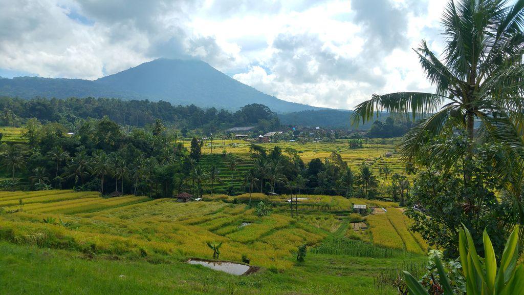 riziere de jatiluwih avec vue sur montagne de bali