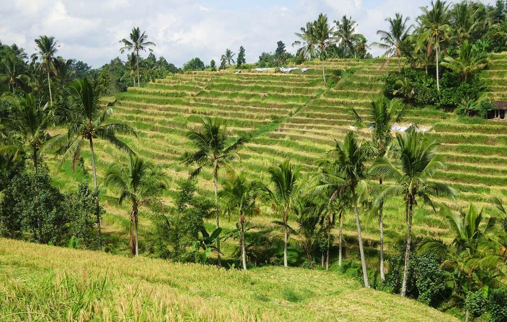 riziere en escalier a bali