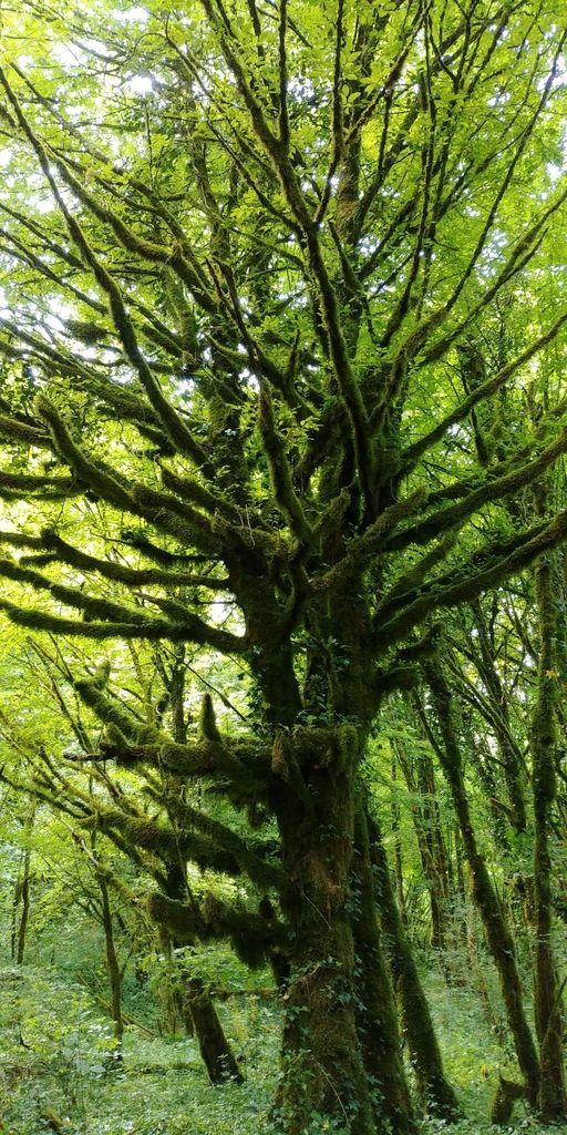 arbre a mousse