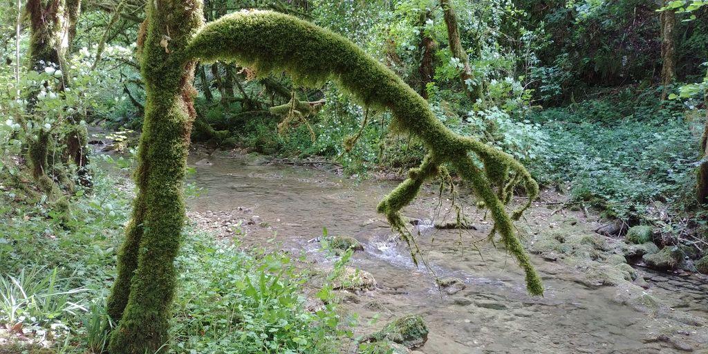 arbre plein de mousse