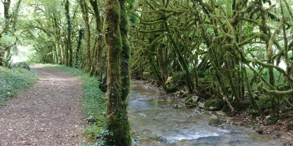sentier près de la rivière