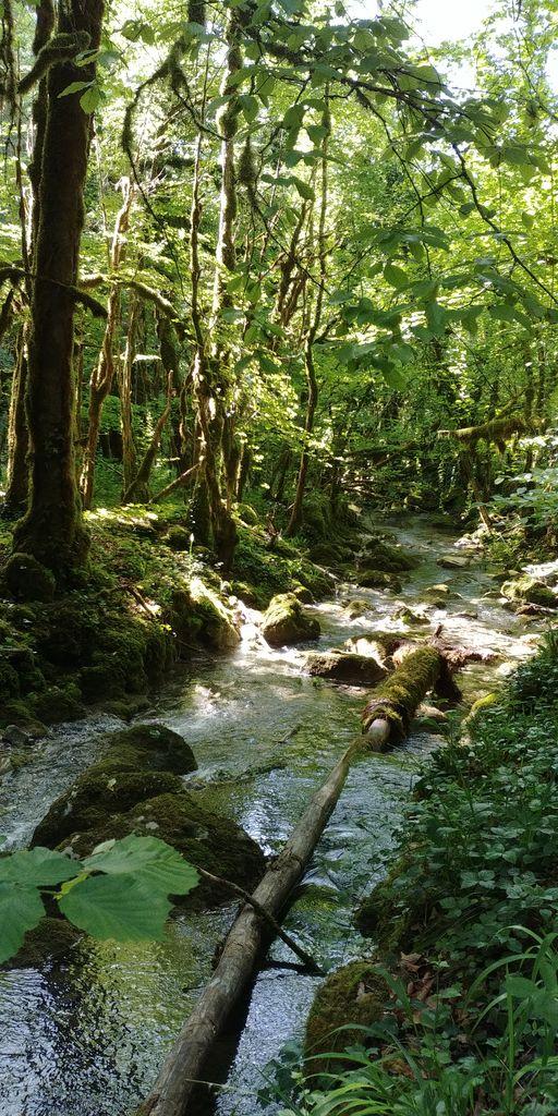 rivière dans foret de l'ain