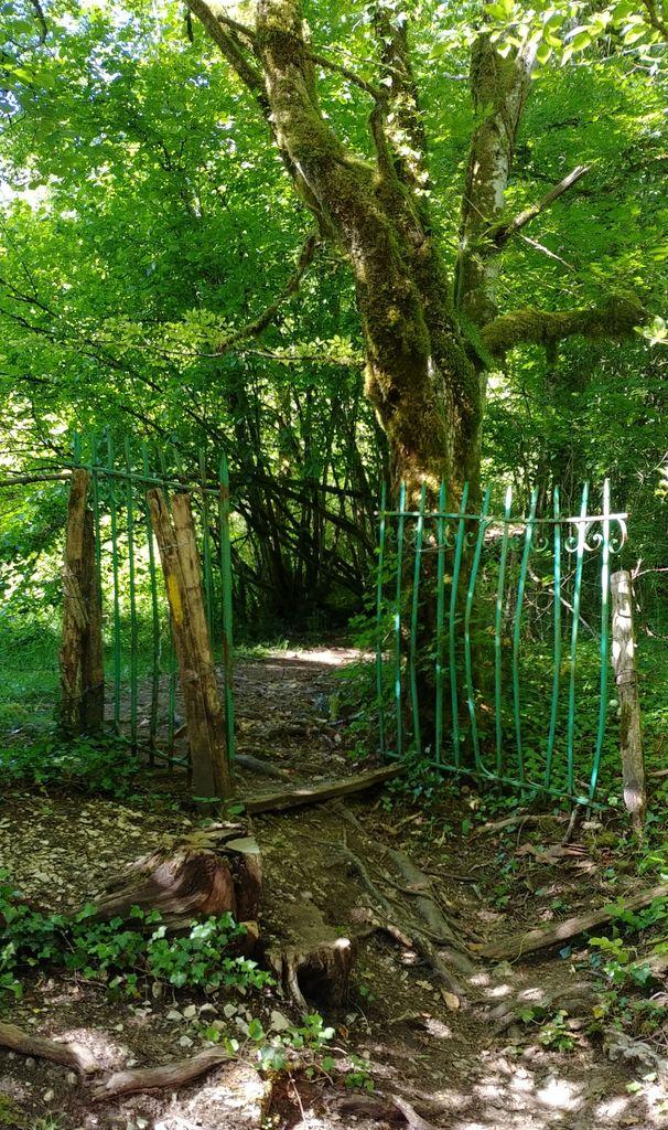 grille de portail dans les bois