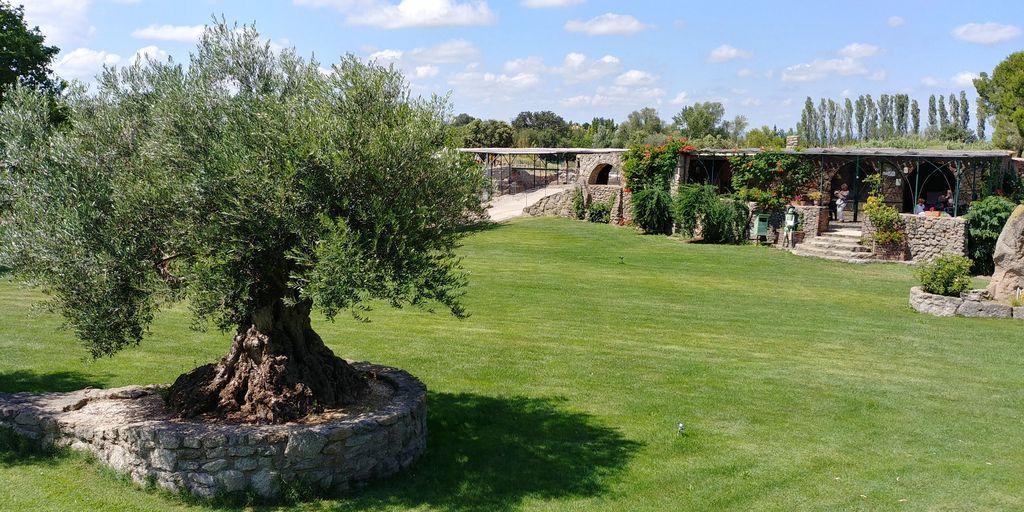 olivier et espace restauration