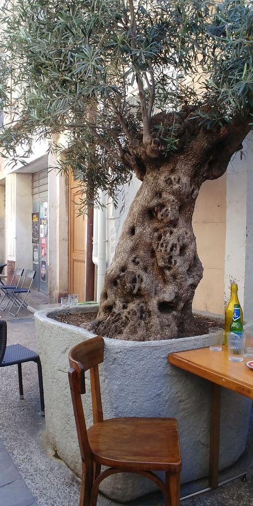 terrasse de fritto sous l'olivier